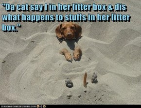 """Da cat say I in her litter box & dis what happens to stuffs in her litter box."""