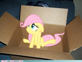 My Little Fluttershy