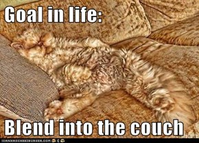 Goal in life:  Blend into the couch