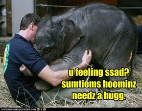 Elephant Hugs: Your Argument is Invalid
