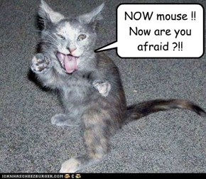 NOW mouse !! Now are you afraid ?!!