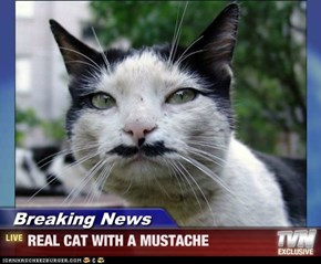 Breaking News - REAL CAT WITH A MUSTACHE