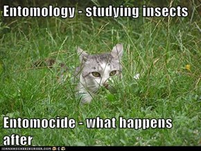 Entomology - studying insects