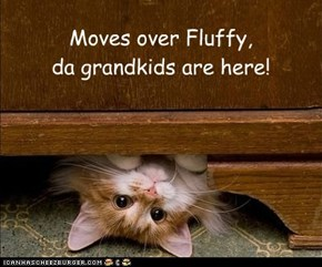 Moves over Fluffy, da grandkids are here!