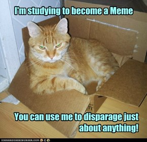 Including Memes!