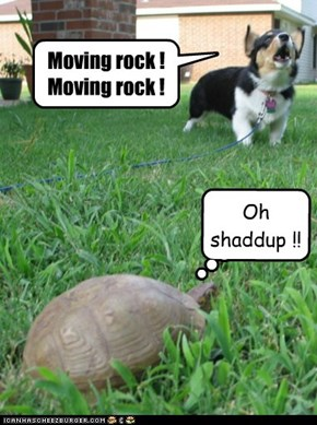 Moving rock ! Moving rock !