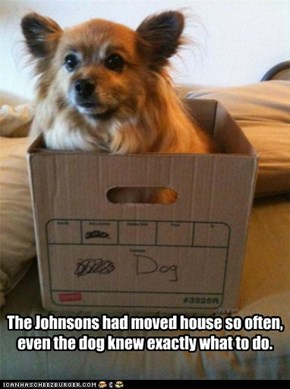 The Johnsons had moved house so often, even the dog knew exactly what to do.