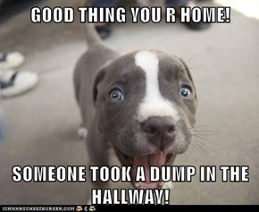 GOOD THING YOU R HOME!  SOMEONE TOOK A DUMP IN THE HALLWAY!