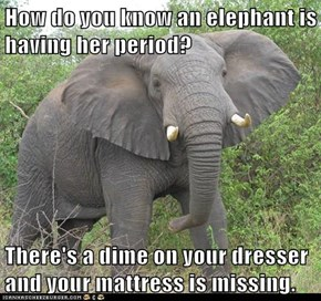 How do you know an elephant is having her period?  There's a dime on your dresser and your mattress is missing.