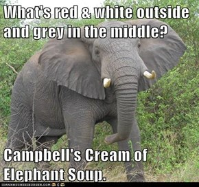 What's red & white outside and grey in the middle?  Campbell's Cream of Elephant Soup.