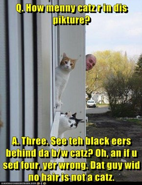 Q. How menny catz r in dis pikture?  A. Three. See teh black eers behind da b/w catz? Oh, an if u sed four, yer wrong. Dat guy wid no hair is not a catz.
