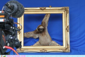 Work It Sloth Model