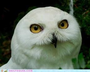 Squee Spree: Smug Owl