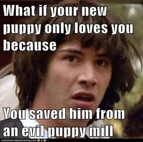 What if your new puppy only loves you because  You saved him from an evil puppy mill
