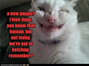 a new puppy? i love dogs,  you know that human, but  not today. we're out of ketchup, remember?