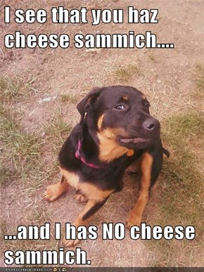 I see that you haz cheese sammich....  ...and I has NO cheese sammich.