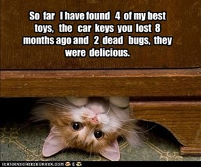 So  far   I have found   4  of my best toys,   the   car  keys  you  lost  8  months ago and   2  dead   bugs,  they  were  delicious.