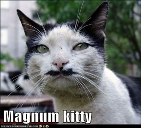 Magnum kitty