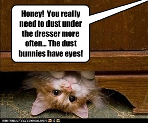 World Record Dust Bunny