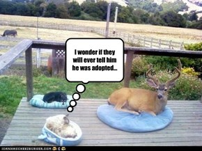 I wonder if they will ever tell him he was adopted...