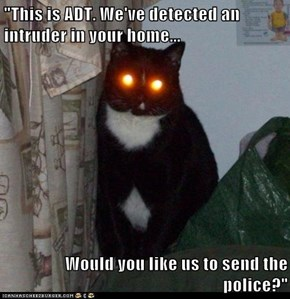 """This is ADT. We've detected an intruder in your home...  Would you like us to send the police?"""