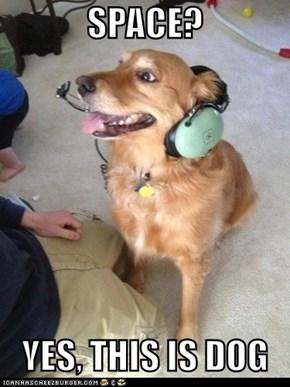 Houston, We Have Dog