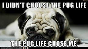 I DIDN'T CHOOSE THE PUG LIFE  THE PUG LIFE CHOSE ME.