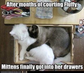 Mittens and Fluffy