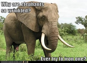 Why are elephants                                                 so wrinkled?  ...Ever try to iron one?