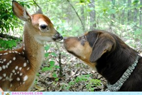 Reader Squee: Obie Meets a Fawn