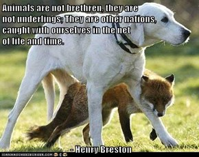 Animals are not brethren, they are                                                    not underlings; They are other nations,                                                    caught with ourselves in the net