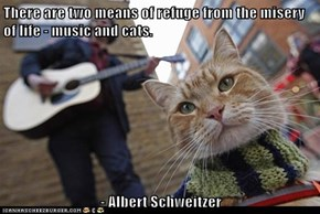 There are two means of refuge from the misery of life - music and cats.  - Albert Schweitzer