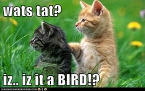 wats tat?  iz.. iz it a BIRD!?