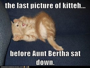 the last picture of kitteh...  before Aunt Bertha sat down.