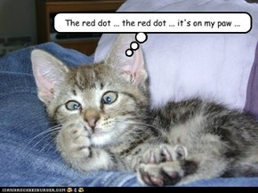 The red dot ... the red dot ... it's on my paw ...