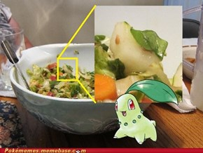 A Wild Chikorita Appeared