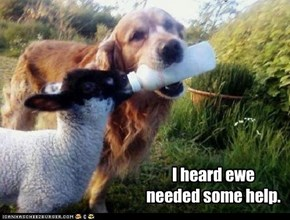 I heard ewe needed some help.