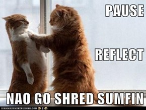 PAUSE REFLECT NAO GO SHRED SUMFIN