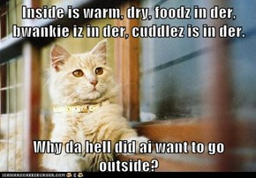 Inside is warm, dry, foodz in der, bwankie iz in der, cuddlez is in der.  Why da hell did ai want to go outside?