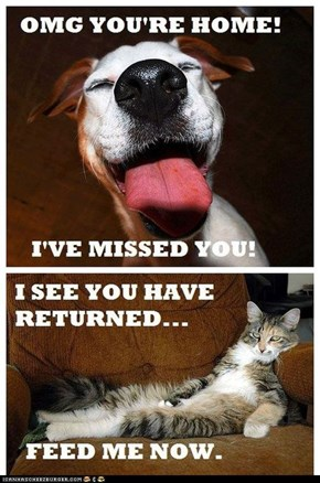 One of the Many Differences Between Dogs and Cats