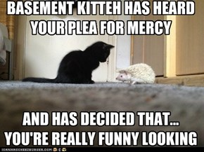 BASEMENT KITTEH HAS HEARD  YOUR PLEA FOR MERCY