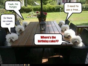 Where's the birthday cake??