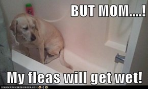 BUT MOM....!  My fleas will get wet!