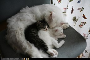 Cyoot Kittehs of teh Day: Little Spoon, Bigger Spoon, Biggest Spoon