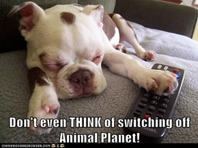 Don't even THINK of switching off Animal Planet!
