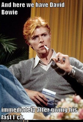 And here we have David Bowie  immediately after giving his last f*ck.