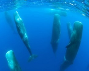 Look At These Snoozing Whales of the Day