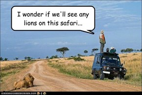 I wonder if we'll see any  lions on this safari...