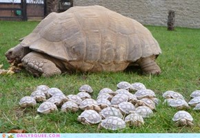 Hoard of Turtles