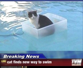 Breaking News - cat finds new way to swim